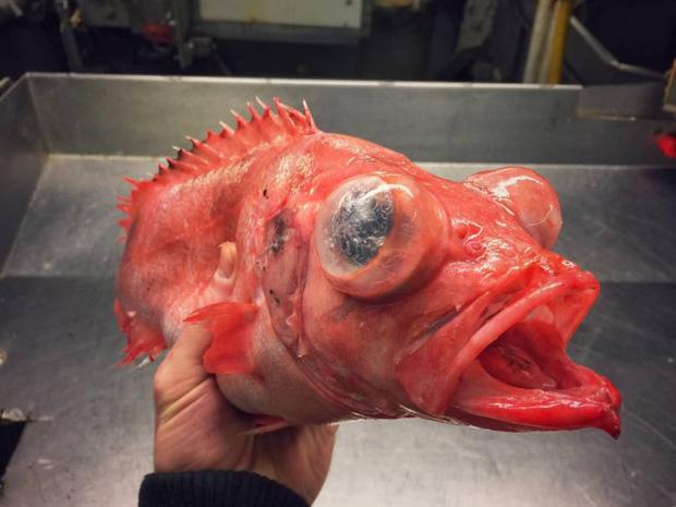 Anh ngư dân có duyên với cá quái vật, câu được nhiều tới nỗi phải lập Instagram để lan tỏa chiến công với mọi người - Ảnh 8.