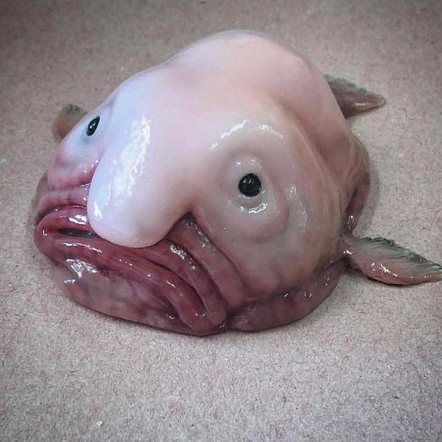 Anh ngư dân có duyên với cá quái vật, câu được nhiều tới nỗi phải lập Instagram để lan tỏa chiến công với mọi người - Ảnh 9.