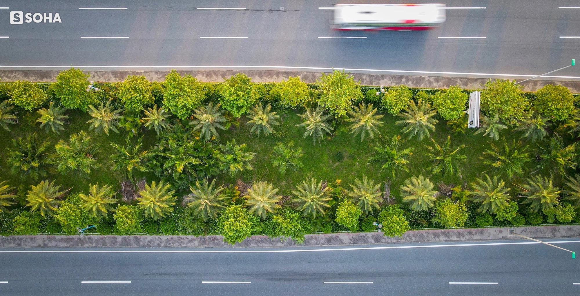 Cận cảnh hàng cây bàng lá nhỏ, chà là trong vụ Tổng Giám đốc công ty cây xanh Hà Nội bị bắt - Ảnh 16.
