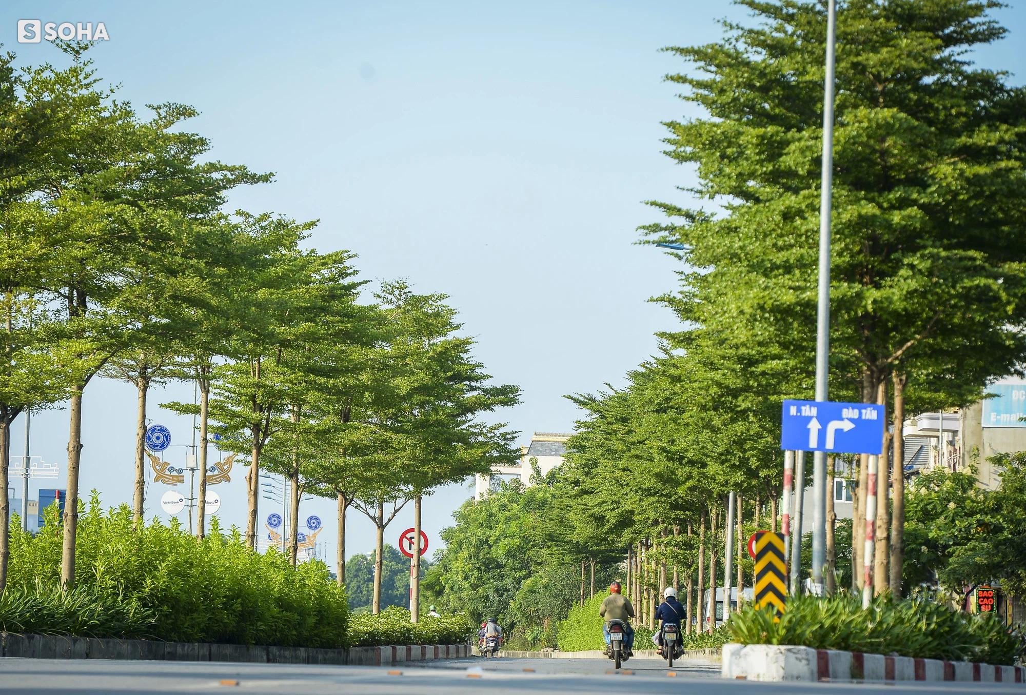 Cận cảnh hàng cây bàng lá nhỏ, chà là trong vụ Tổng Giám đốc công ty cây xanh Hà Nội bị bắt - Ảnh 1.