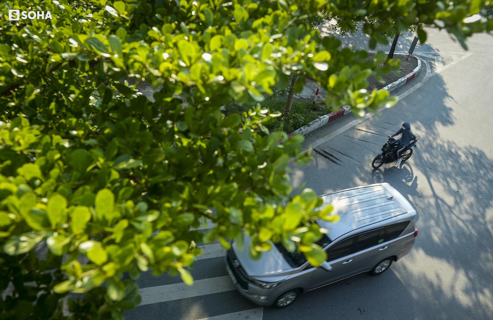 Cận cảnh hàng cây bàng lá nhỏ, chà là trong vụ Tổng Giám đốc công ty cây xanh Hà Nội bị bắt - Ảnh 2.