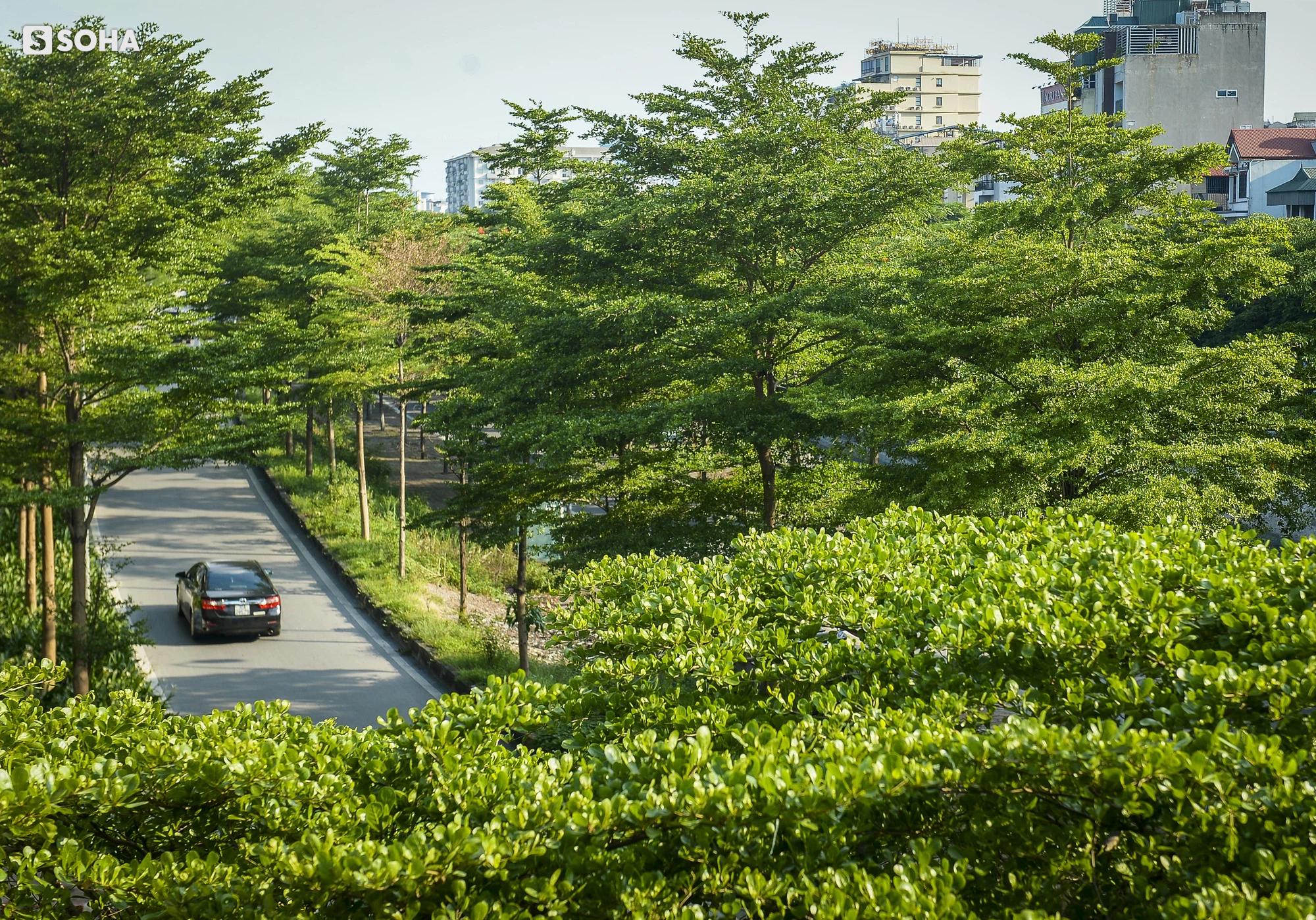 Cận cảnh hàng cây bàng lá nhỏ, chà là trong vụ Tổng Giám đốc công ty cây xanh Hà Nội bị bắt - Ảnh 3.