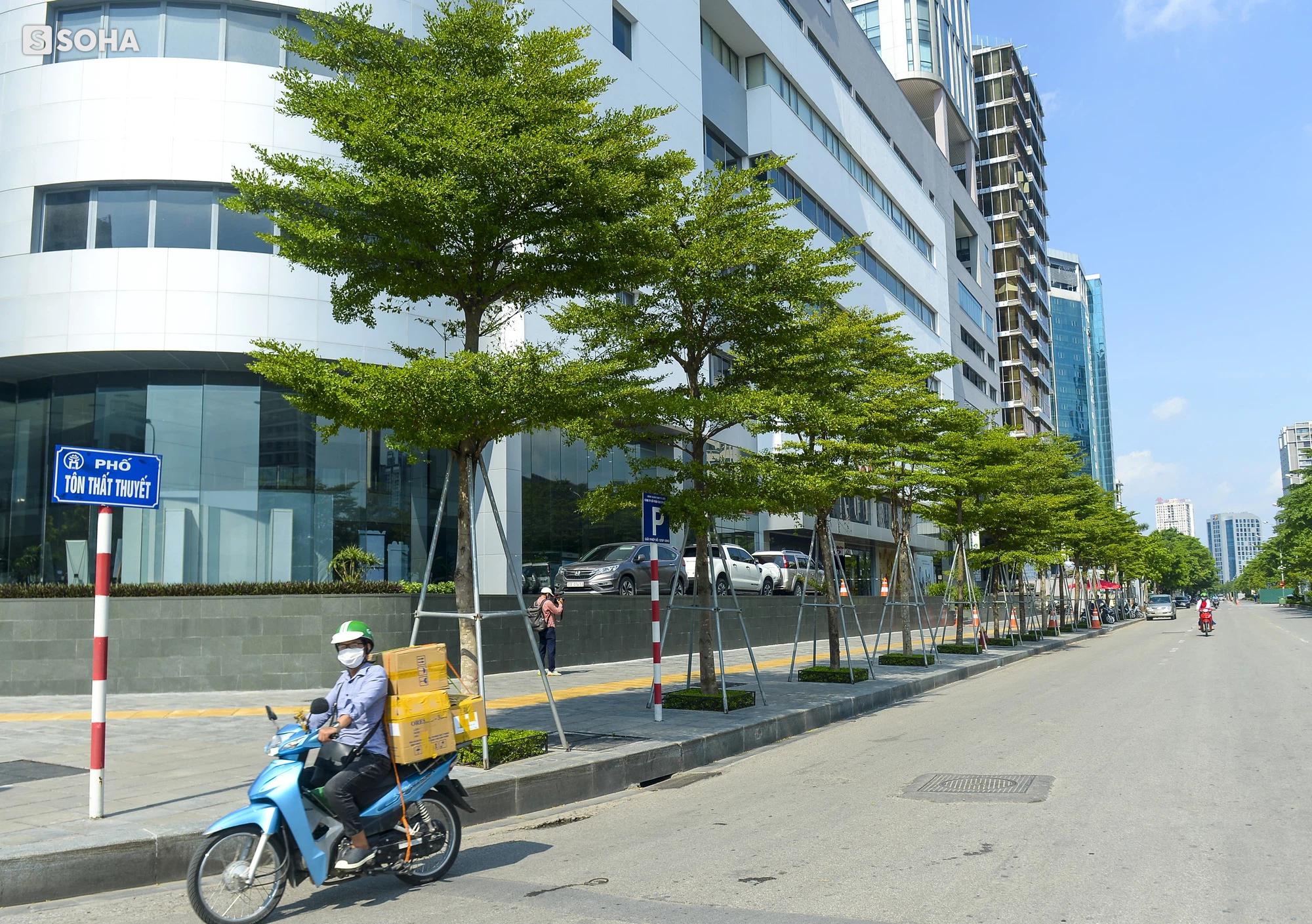 Cận cảnh hàng cây bàng lá nhỏ, chà là trong vụ Tổng Giám đốc công ty cây xanh Hà Nội bị bắt - Ảnh 7.