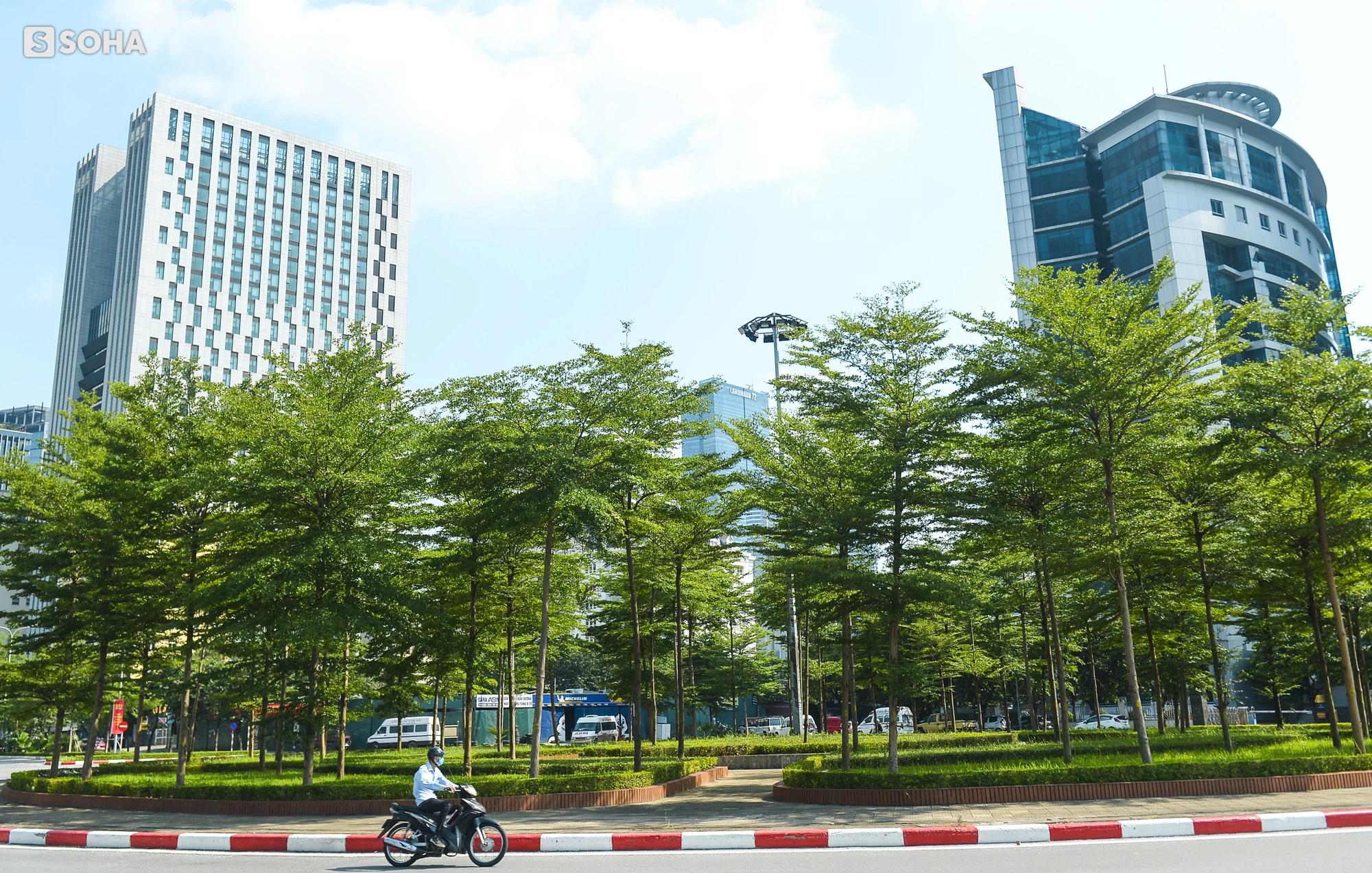Cận cảnh hàng cây bàng lá nhỏ, chà là trong vụ Tổng Giám đốc công ty cây xanh Hà Nội bị bắt - Ảnh 8.