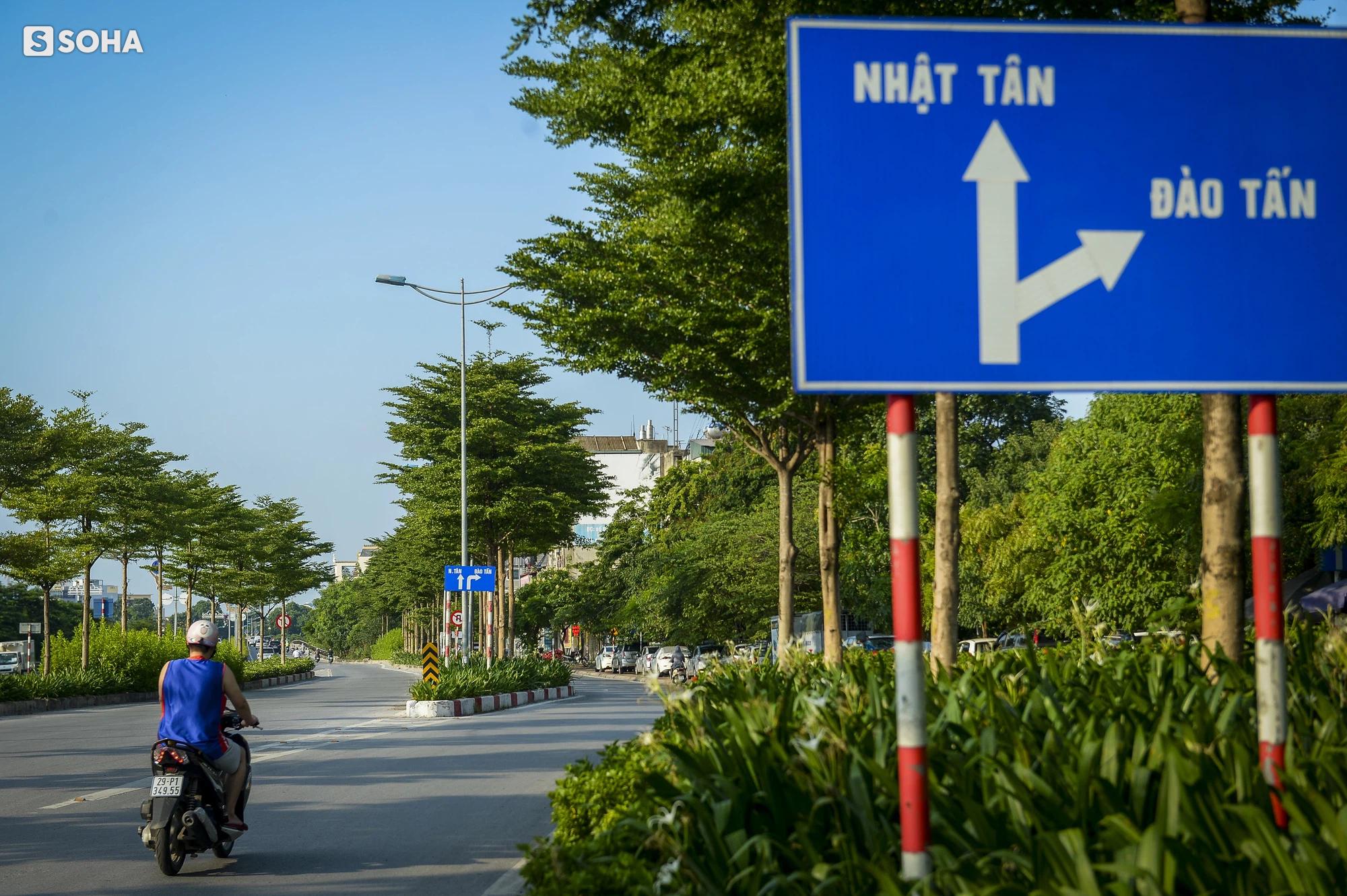 Cận cảnh hàng cây bàng lá nhỏ, chà là trong vụ Tổng Giám đốc công ty cây xanh Hà Nội bị bắt - Ảnh 12.