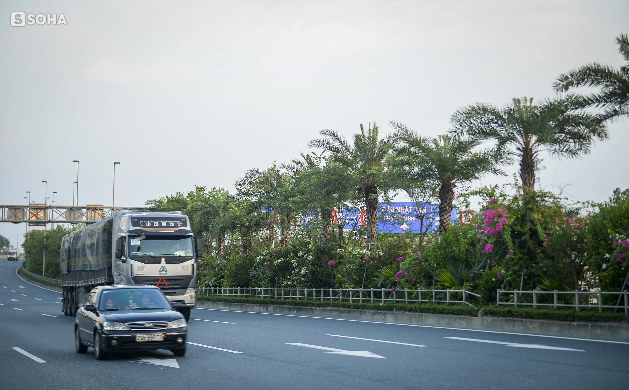 Cận cảnh hàng cây bàng lá nhỏ, chà là trong vụ Tổng Giám đốc công ty cây xanh Hà Nội bị bắt - Ảnh 14.