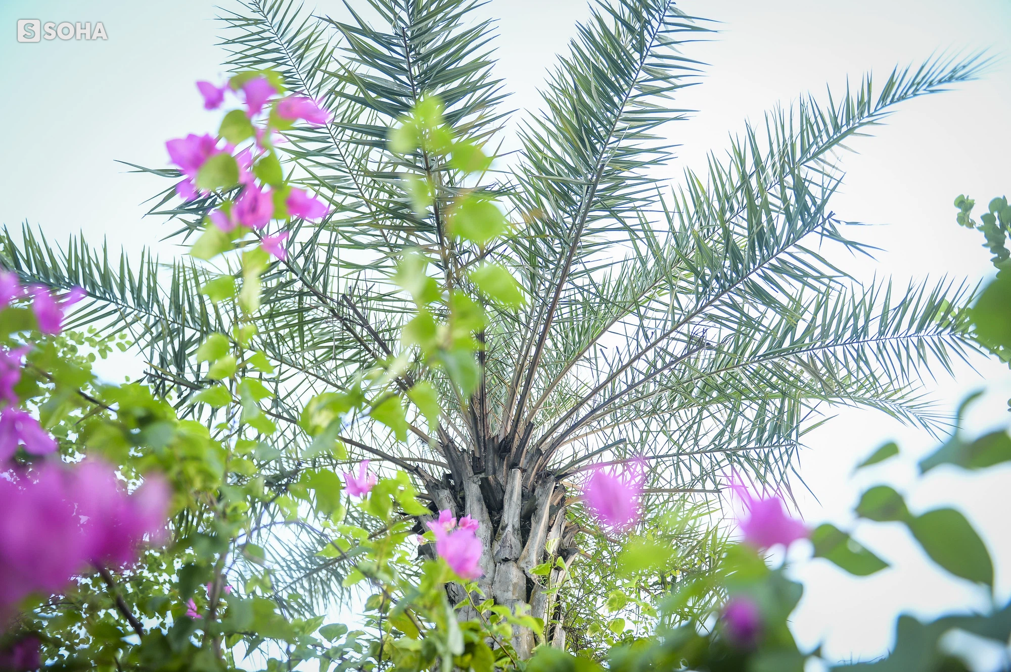 Cận cảnh hàng cây bàng lá nhỏ, chà là trong vụ Tổng Giám đốc công ty cây xanh Hà Nội bị bắt - Ảnh 17.