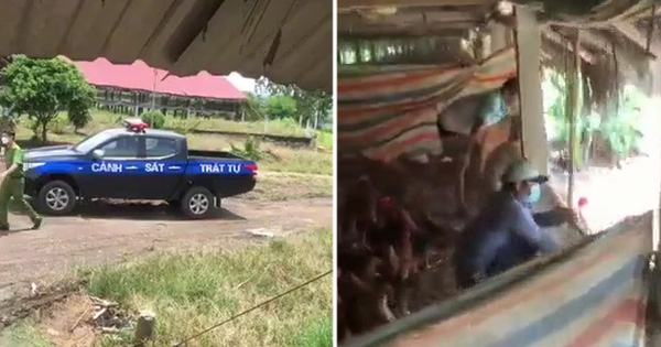 Đang bán gà thì thấy mấy chiếc xe cảnh sát kéo đến nhà, chị chủ trang trại hú vía nhưng sự thật lại khiến người xem bật cười - Ảnh 2.