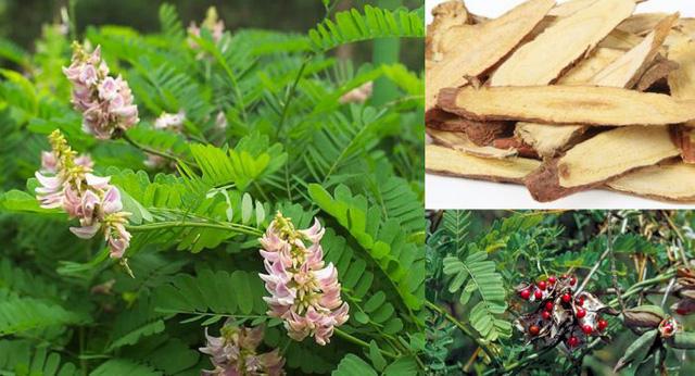 5 bài thuốc trị bệnh liên quan đến phổi trong mùa thu - Ảnh 2.