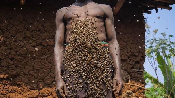 Người đàn ông tự xưng là Vua ong: điều khiển được ong như Tiểu long nữ, cả đời chưa bao giờ bị ong đốt - Ảnh 3.