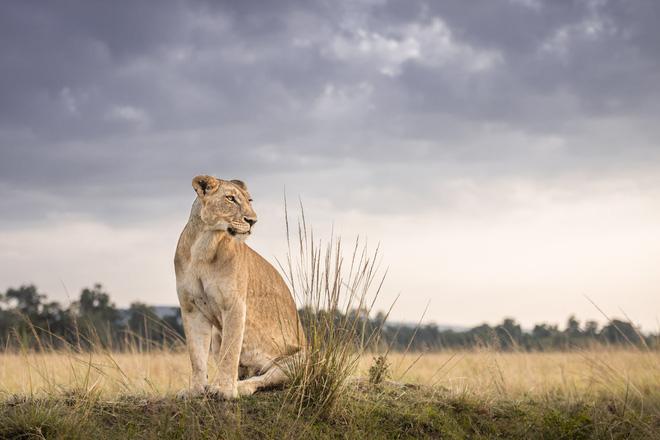 Tận dụng thời gian mắc kẹt ở Kenya do đại dịch, nhiếp ảnh gia tạo ra album ảnh động vật hoang dã ấn tượng - Ảnh 11.