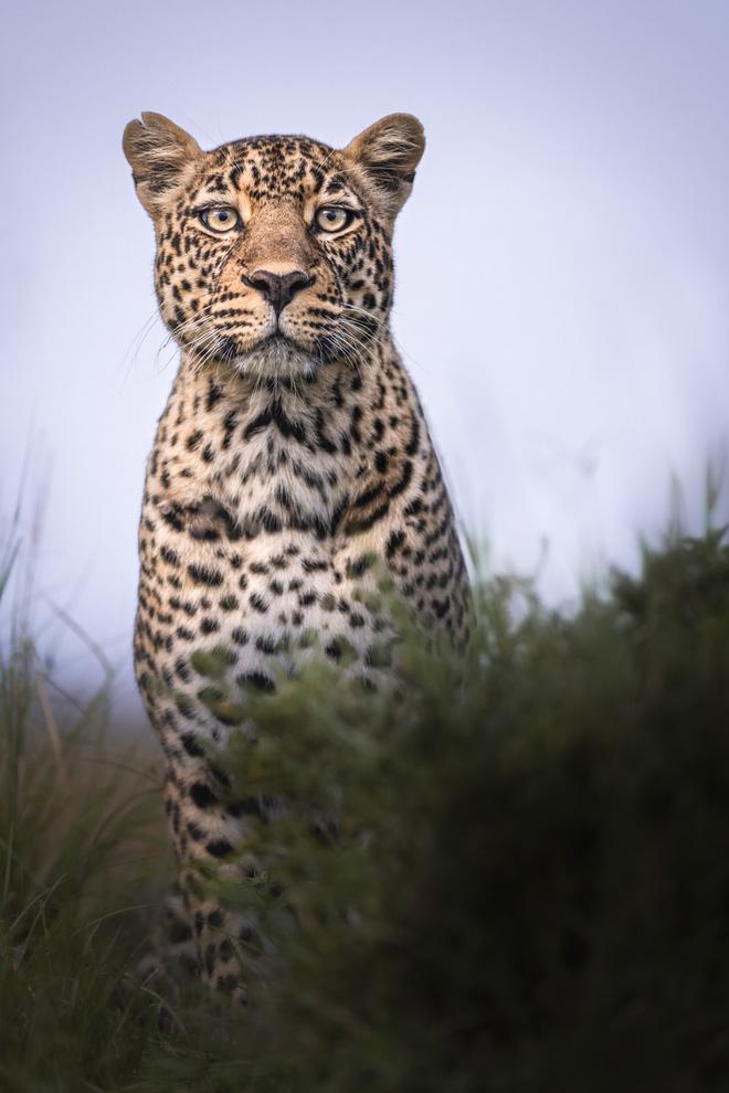 Tận dụng thời gian mắc kẹt ở Kenya do đại dịch, nhiếp ảnh gia tạo ra album ảnh động vật hoang dã ấn tượng - Ảnh 4.