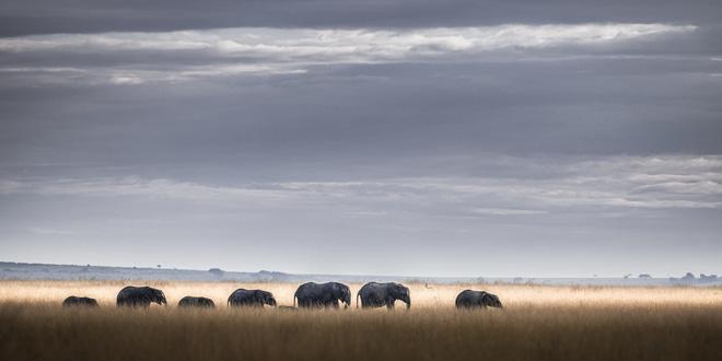 Tận dụng thời gian mắc kẹt ở Kenya do đại dịch, nhiếp ảnh gia tạo ra album ảnh động vật hoang dã ấn tượng - Ảnh 5.