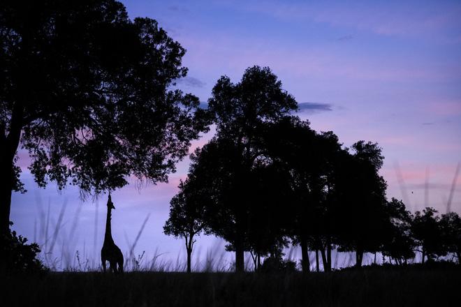 Tận dụng thời gian mắc kẹt ở Kenya do đại dịch, nhiếp ảnh gia tạo ra album ảnh động vật hoang dã ấn tượng - Ảnh 7.
