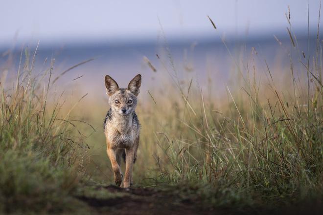 Tận dụng thời gian mắc kẹt ở Kenya do đại dịch, nhiếp ảnh gia tạo ra album ảnh động vật hoang dã ấn tượng - Ảnh 8.