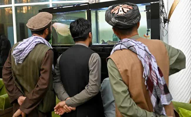 Taliban lác mắt vì cung điện xa hoa bậc nhất của cựu Phó tổng thống Afghanistan: Chỗ nào cũng sặc mùi tiền - Ảnh 4.