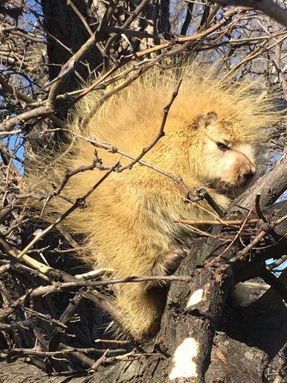 Đi qua 1 cái cây, người phụ nữ bắt gặp con vật lạ khiến dân mạng đau đầu không biết đây là con gì - Ảnh 3.
