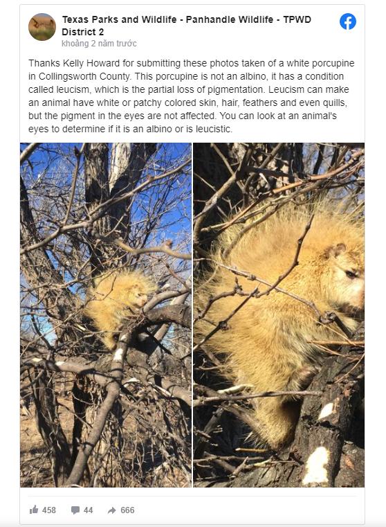 Đi qua 1 cái cây, người phụ nữ bắt gặp con vật lạ khiến dân mạng đau đầu không biết đây là con gì - Ảnh 4.