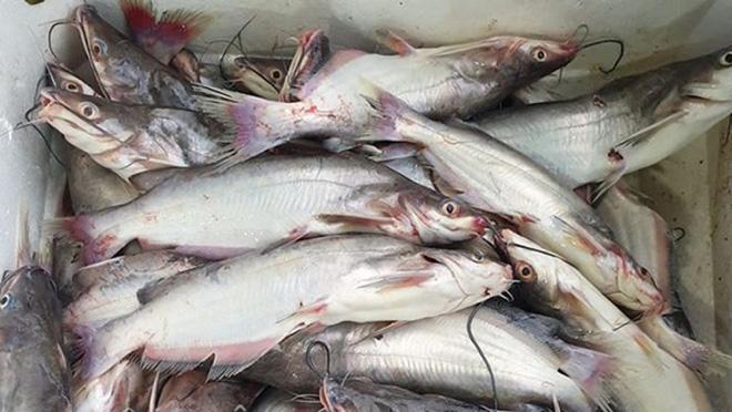 Sau cơn mưa, cả đàn cá sát thủ bơi kín sân của một gia đình khiến dân mạng thi nhau trầm trồ: Hốt bạc rồi - Ảnh 3.
