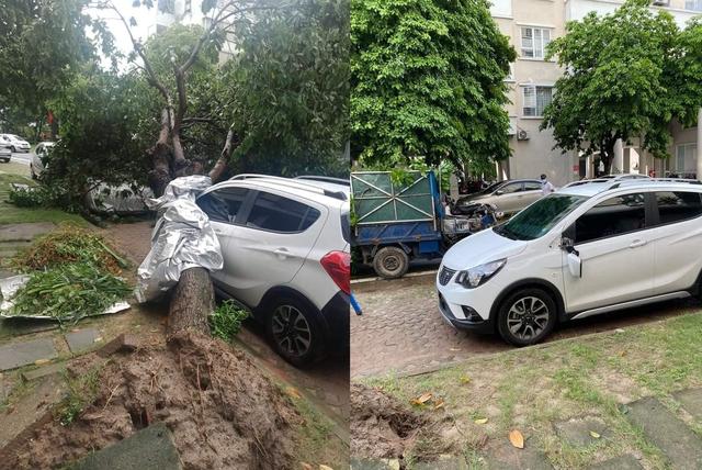 Ôm trọn cây bị đổ sau mưa lớn, thiệt hại của VinFast Fadil làm CĐM thốt lên: Mua Fadil thôi - Ảnh 1.
