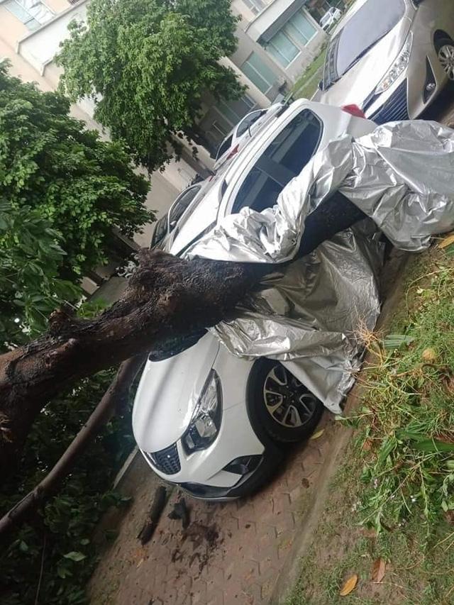 Ôm trọn cây bị đổ sau mưa lớn, thiệt hại của VinFast Fadil làm CĐM thốt lên: Mua Fadil thôi - Ảnh 2.