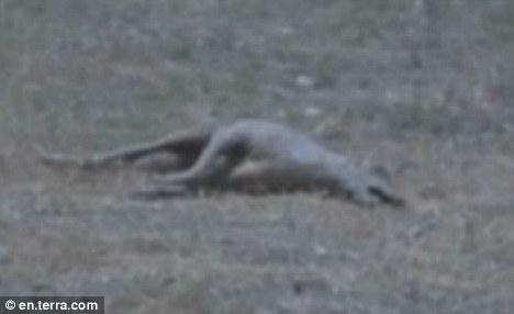 Thấy con vật lảng vảng quanh nhà, cậu bé dùng súng săn bắn hạ, quan sát kỹ nó nhiều người sợ toát mồ hôi - Ảnh 3.