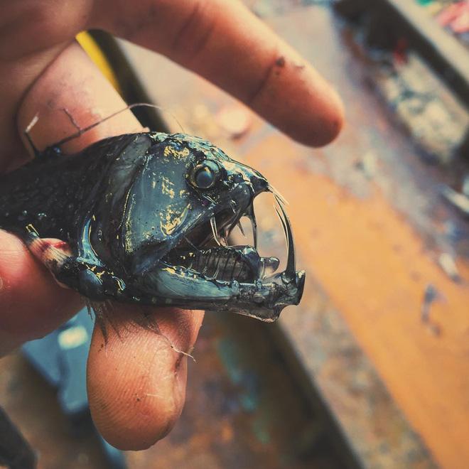Đây là những quái vật biển sâu được một ngư dân người Nga đưa lên khỏi mặt nước - Ảnh 11.