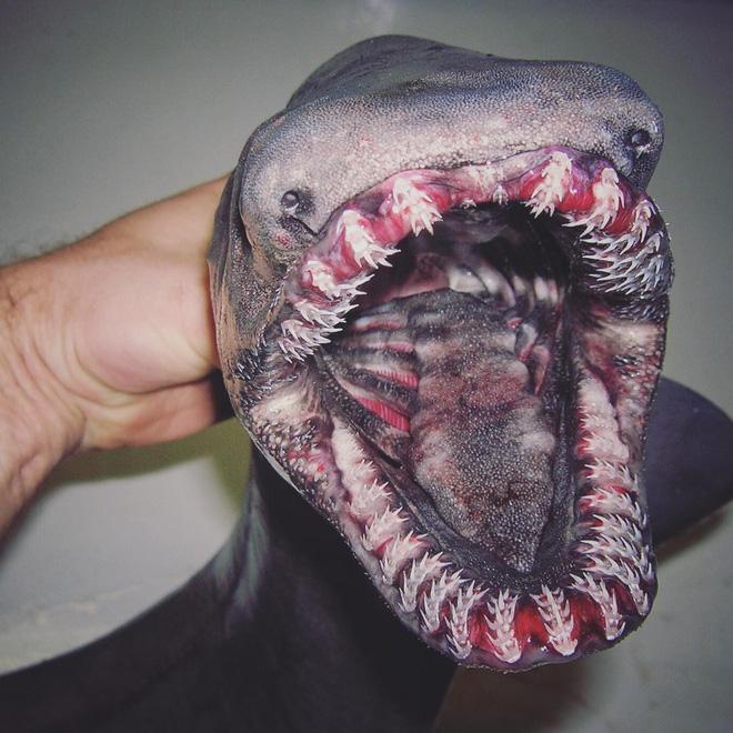 Đây là những quái vật biển sâu được một ngư dân người Nga đưa lên khỏi mặt nước - Ảnh 6.