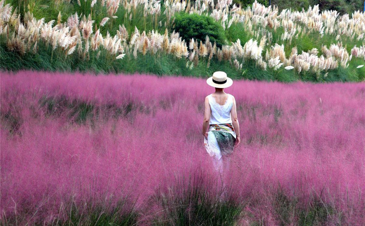 7 ngày qua ảnh: Cô gái chụp ảnh trên cánh đồng cỏ hồng ở Trung Quốc
