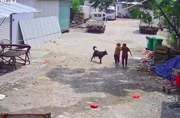 Bị chó dữ lao vào tấn công giữa đường, cụ bà tử vong thương tâm, hành động của người tài xế gần đó gây phẫn nộ tột độ - Ảnh 3.