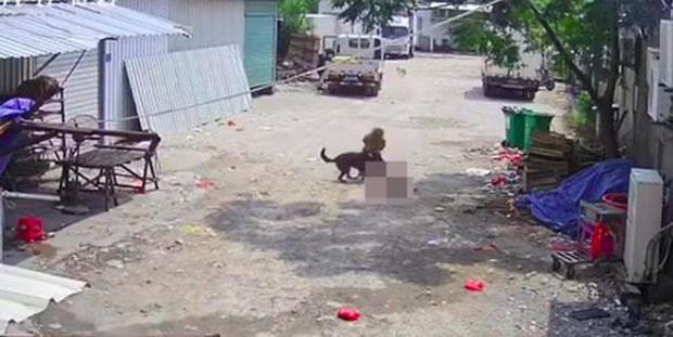 Bị chó dữ lao vào tấn công giữa đường, cụ bà tử vong thương tâm, hành động của người tài xế gần đó gây phẫn nộ tột độ - Ảnh 5.