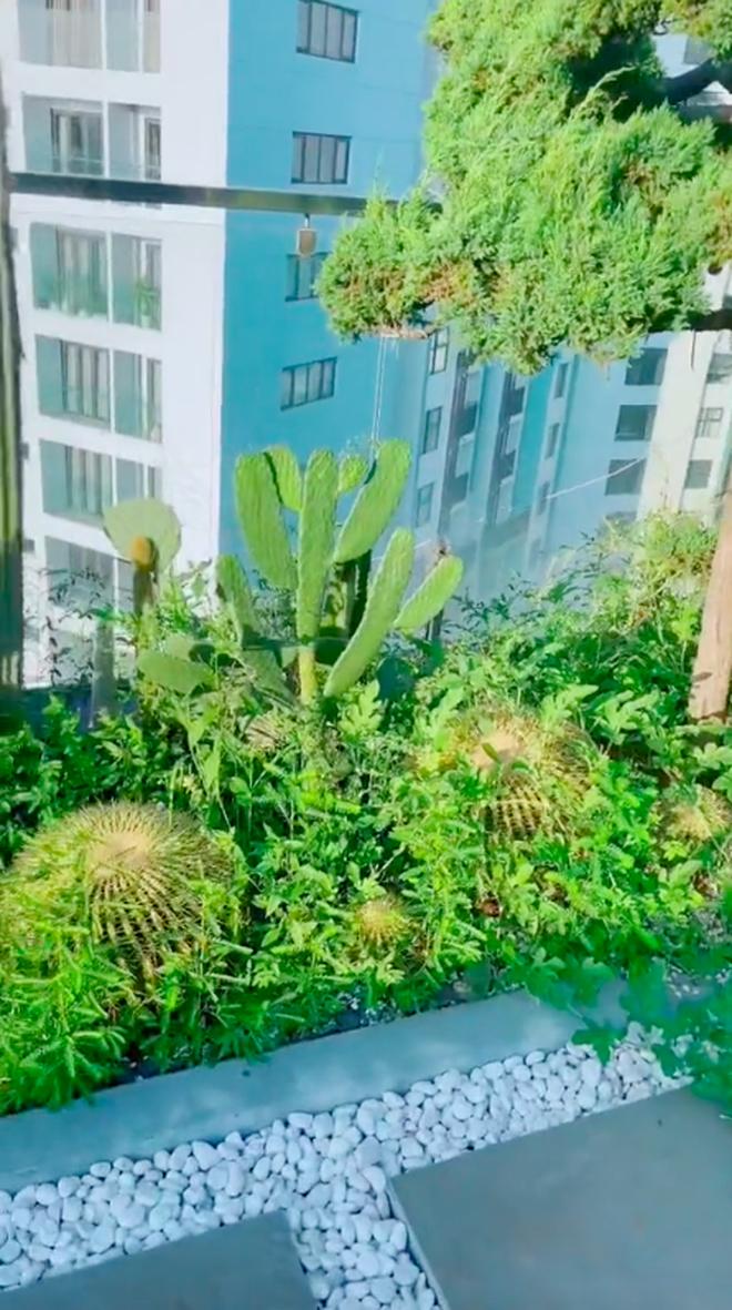 Về quê tránh dịch 1,5 tháng, gia chủ tá hoả khi quay lại thấy vườn penthouse mọc đầy dưa hấu, nghe lý do mới thấy cực nể - Ảnh 4.