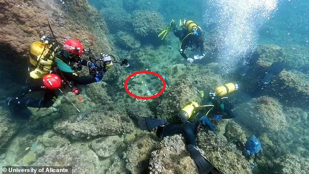 Đi lặn biển, 2 anh em vô tình đụng trúng kho báu, càng nhìn càng không dám tin vào mắt mình - Ảnh 2.