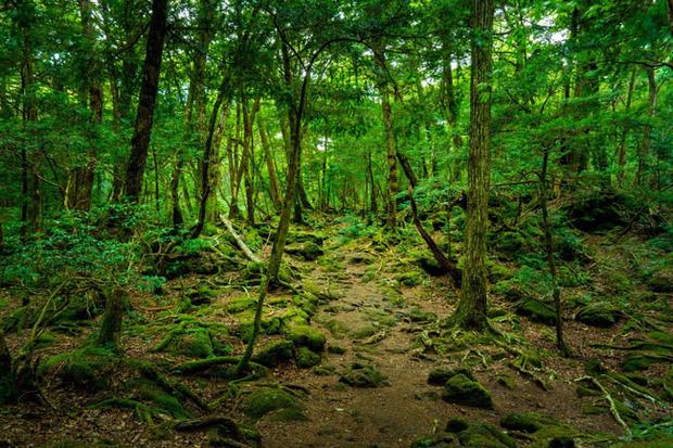 Đi trước thời đại là thế nhưng Nhật Bản vẫn có những địa điểm bị lãng quên, khung cảnh rùng rợn với vô số lời đồn kỳ bí - Ảnh 9.