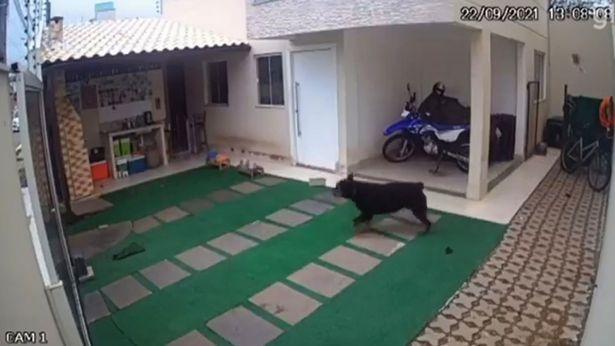 """Hai chú chó cưng chết đầy bí ẩn trong vườn, chủ xem camera thì hãi hùng trước """"sát thủ"""" to bằng đầu ngón tay - Ảnh 5."""