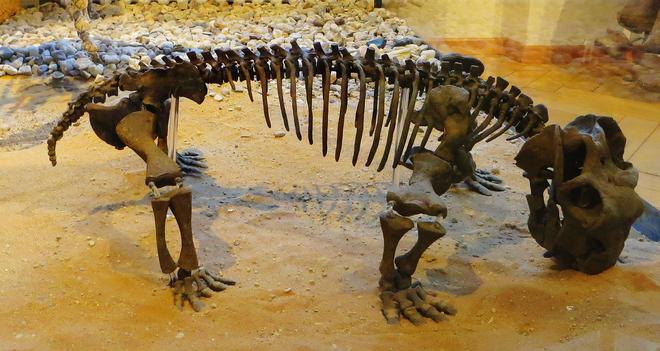 Những hiện tượng cực đoan đang diễn ra trên Trái Đất giống những gì xảy ra trong sự kiện tuyệt chủng tồi tệ nhất lịch sử Hành tinh Xanh - Ảnh 1.