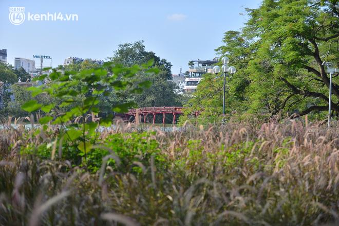 Ảnh: Hàng ghế ở hồ Gươm bị cỏ dại mọc bao quanh sau 2 tháng Hà Nội thực hiện giãn cách - Ảnh 3.