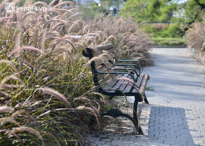 Ảnh: Hàng ghế ở hồ Gươm bị cỏ dại mọc bao quanh sau 2 tháng Hà Nội thực hiện giãn cách - Ảnh 9.
