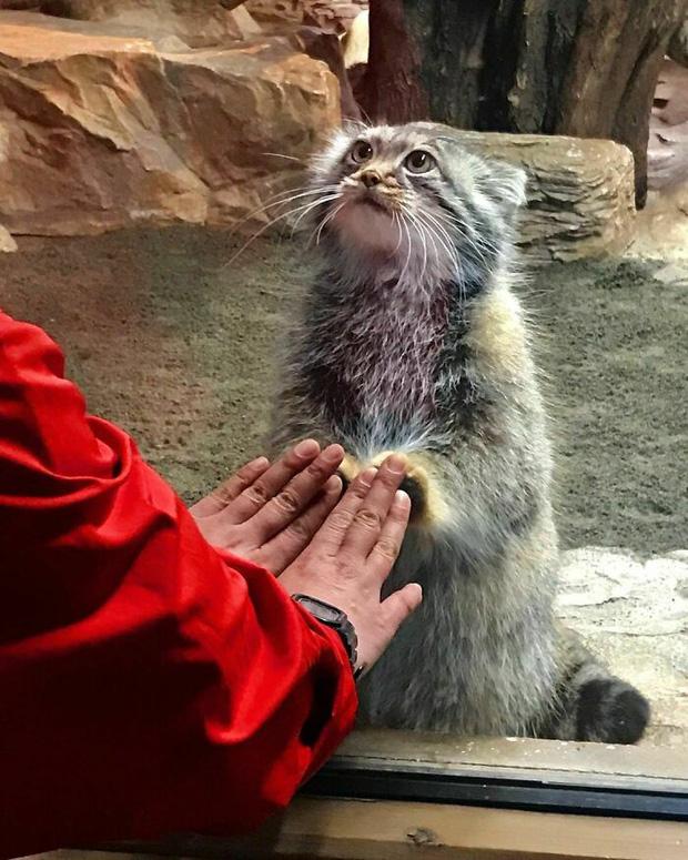 24 chú động vật có năng lực tấu hài cực mạnh, chỉ cần chủ nhân giơ máy lên là diễn đủ trò để đời - Ảnh 17.