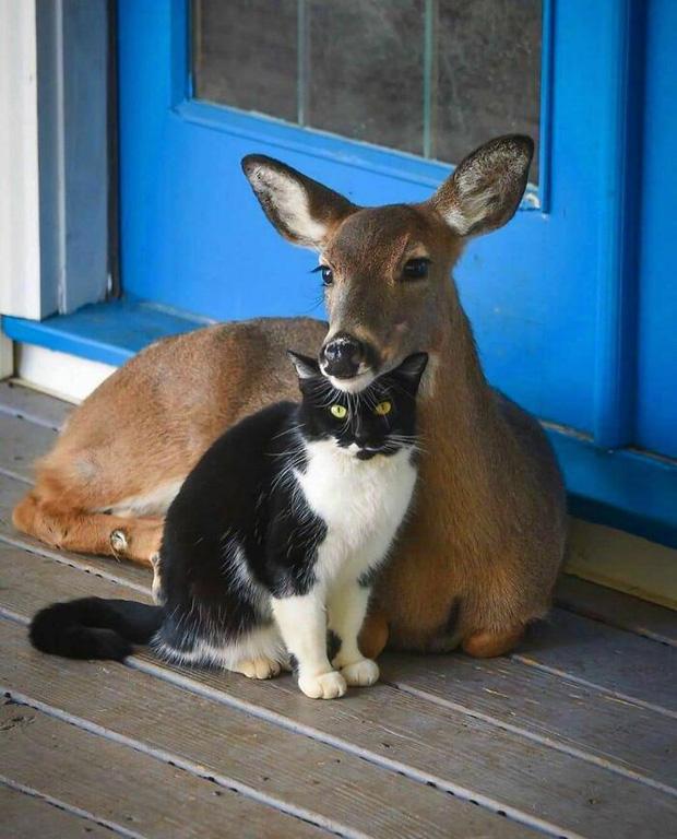 24 chú động vật có năng lực tấu hài cực mạnh, chỉ cần chủ nhân giơ máy lên là diễn đủ trò để đời - Ảnh 6.