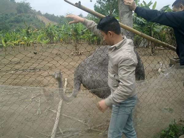 Bố con Vũ Xuân Tiến ước mơ mở trang trại nuôi Đà Điểu