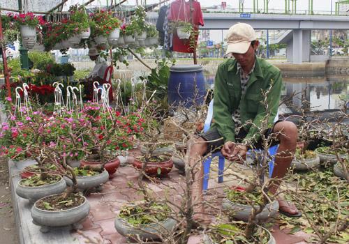 Hoa Tet tap nap ve ben Binh Dong