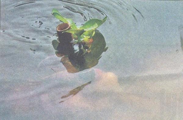 Kỹ thuật ngâm mình trong nước với ống thở được ngụy trang dành cho đặc công nước.