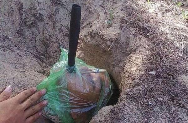 Màn ngụy trang với cơ thể bị cát lấp đến cổ, mặt chùm kín nilon để cát đỡ rơi vào mặt, 1 ống thông khí được đưa vào miệng để thở.