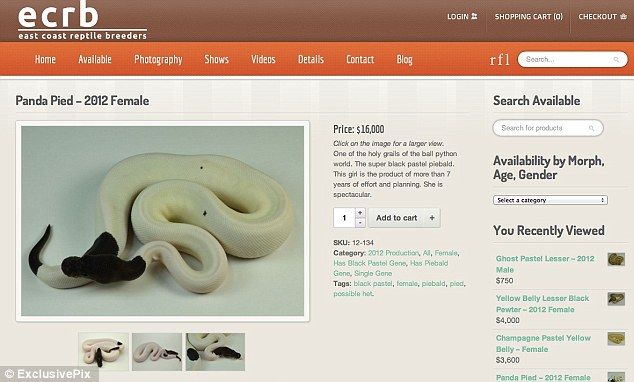 Prized possession: The three-month-old is featured on the website of East Coast Reptile Breeders