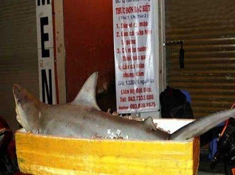 Mổ thịt cá mập, trăn khủng trên vỉa hè