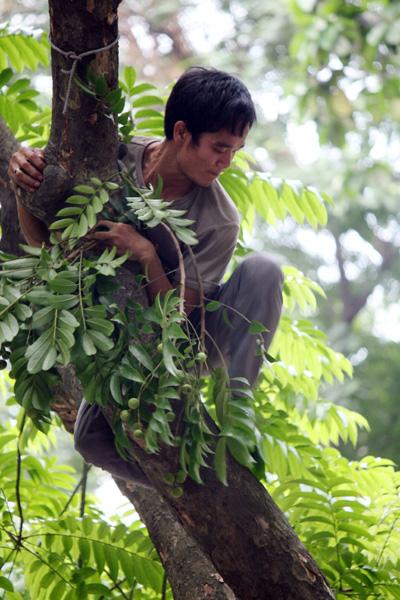 Nghề 'vượn người' ở Hà Nội