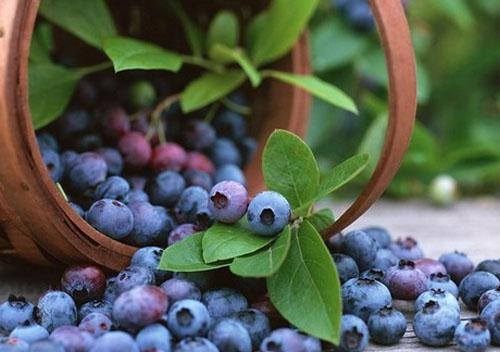 7 loại rau quả giàu chất chống oxy hóa, tốt cho chị em 1