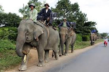 Bí ẩn về cặp ngà voi ở dinh Thống Nhất
