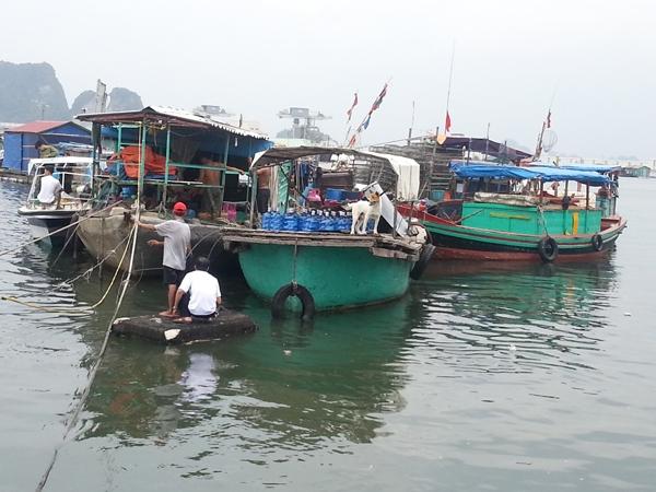 Người dân sống tại làng chài bến Do, TP Cẩm Phả, neo buộc và khẩn trương phòng chống bão số 5 - Ảnh chụp trưa ngày 2/8             ẢNH: THÀNH DUY